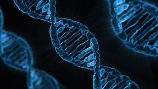 Genetics/Health-DNA