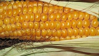 Dry Skin-corn oil